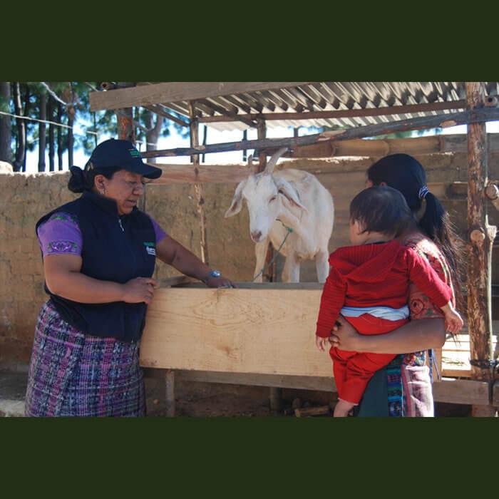CSO responds to COVID-19 in Guatemala