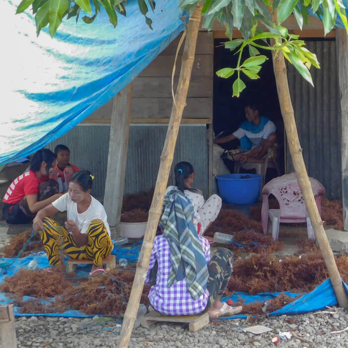 Women drying seaweed, a major industry, in this South Sulawesi village in Indonesia.